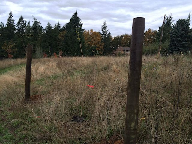 we installed a bit of fencing to try to redirect the deer and elk away from hazelnuts